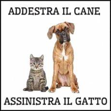 Cani e Gatti in Camping di Luca Stella
