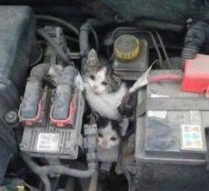 Gatti e il pericolo motore d'inverno